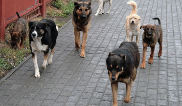 Municipality to solve street dogs issue