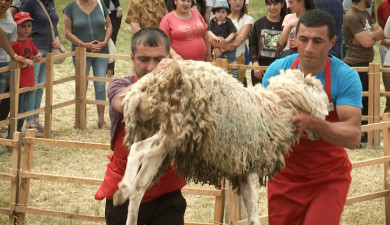 Sheep Shearing Festival in Syunik